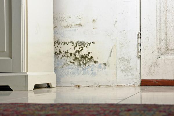 mold damage chicago
