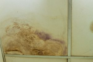 mold removal moldy ceiling tile